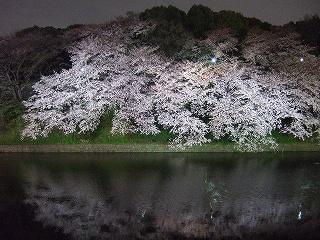 桜 桜 桜@千鳥ヶ淵_d0113725_16105673.jpg