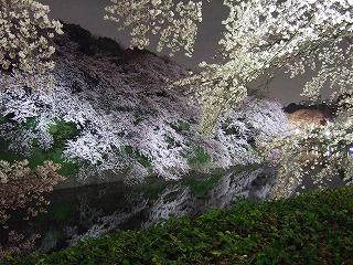 桜 桜 桜@千鳥ヶ淵_d0113725_16133883.jpg