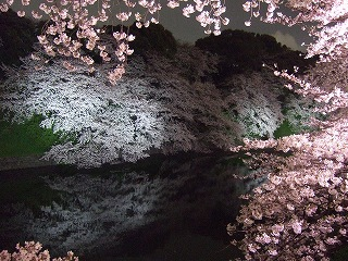 桜 桜 桜@千鳥ヶ淵_d0113725_16135886.jpg