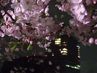 桜 桜 桜@千鳥ヶ淵_d0113725_16333279.jpg