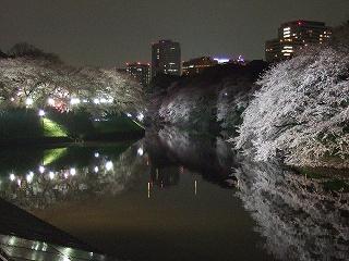 桜 桜 桜@千鳥ヶ淵_d0113725_1664798.jpg