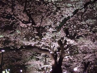 桜 桜 桜@千鳥ヶ淵_d0113725_1675016.jpg