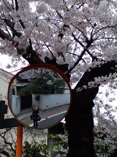 春の新番組情報_b0078127_131461.jpg