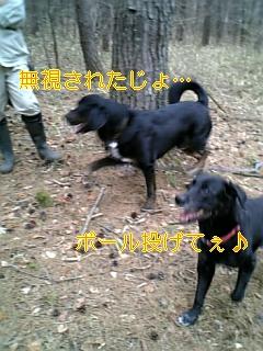 f0148927_952248.jpg