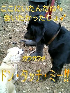 f0148927_9545726.jpg