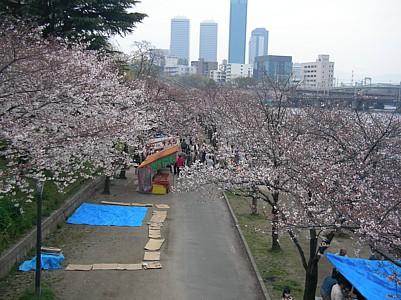 雨のお花見_c0038434_042428.jpg