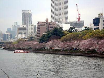 雨のお花見_c0038434_04866.jpg