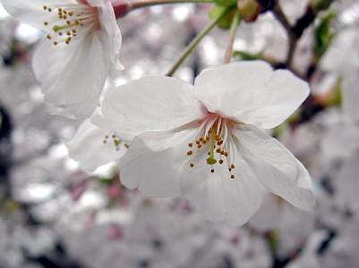 雨のお花見_c0038434_051034.jpg