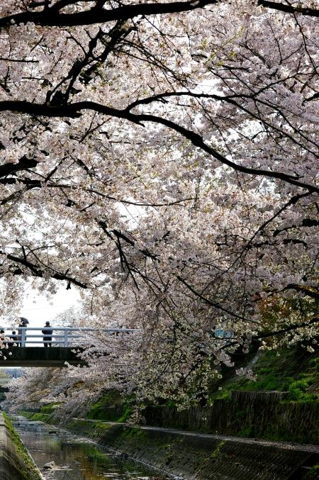 桜 2009_d0145934_16333390.jpg