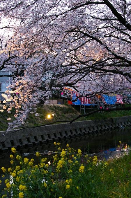 桜 2009_d0145934_16342015.jpg