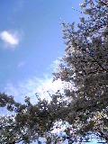 今年の桜人<サクラビト>_f0114838_22115817.jpg