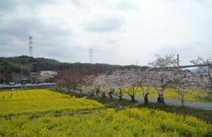 春×2_e0139459_21431741.jpg