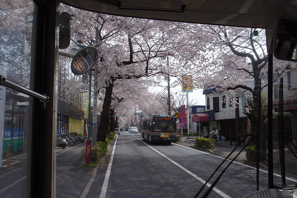 桜並木をバスが行く_d0123171_16431171.jpg