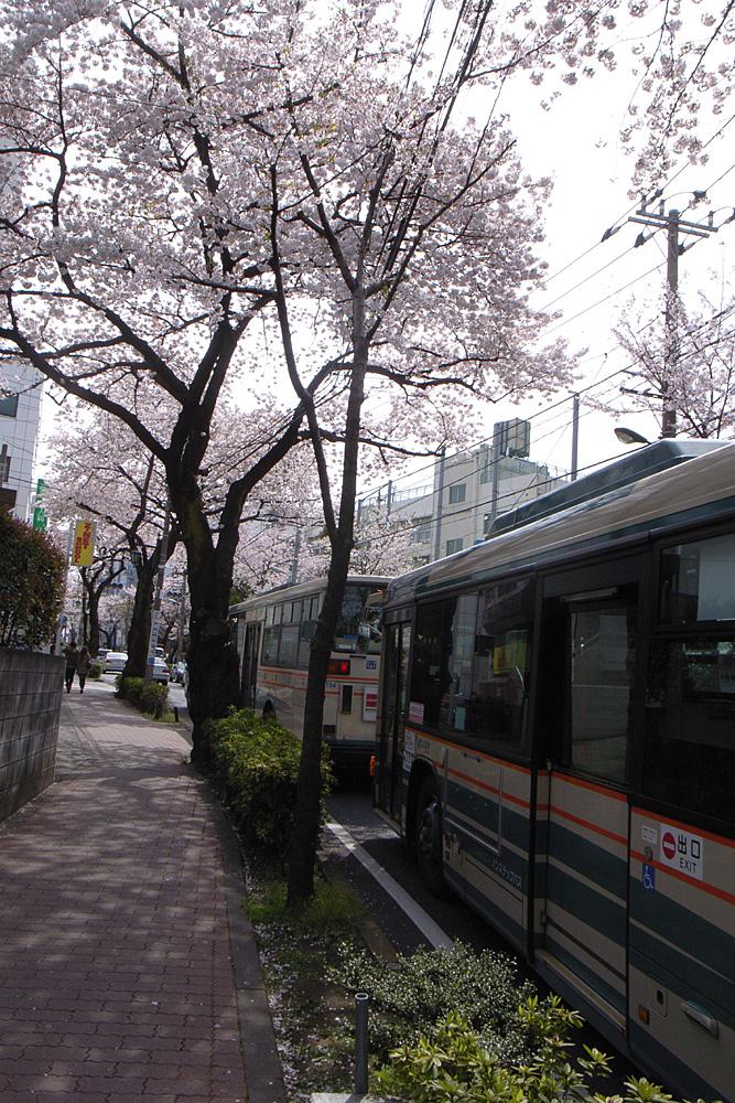 桜並木をバスが行く_d0123171_16432557.jpg
