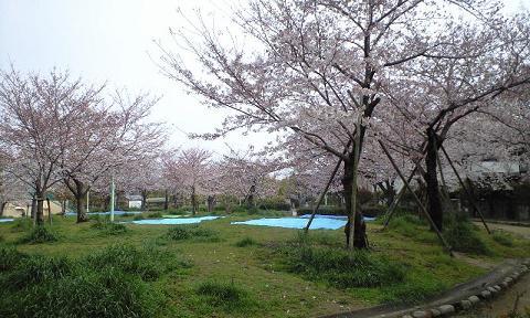 お花見客がいっぱい_d0003977_17312422.jpg