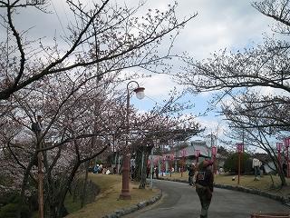 尾道 千光寺公園 お花見 真っ最中!!_d0144077_1364662.jpg