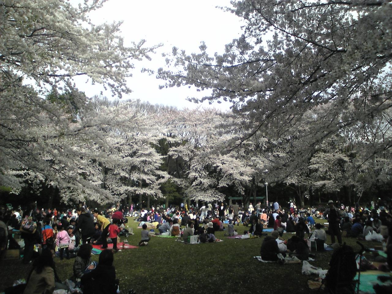 桜の季節_d0135882_4231727.jpg