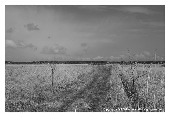 オオセッカの集う湿原_c0170584_9534144.jpg