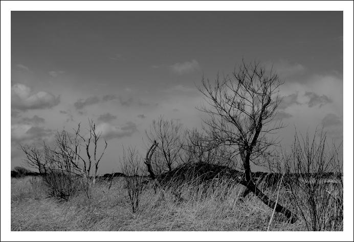 オオセッカの集う湿原_c0170584_9535447.jpg