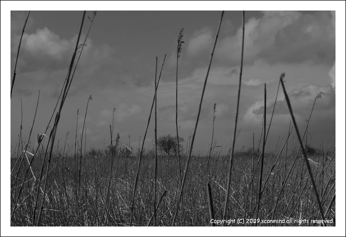 オオセッカの集う湿原_c0170584_954630.jpg