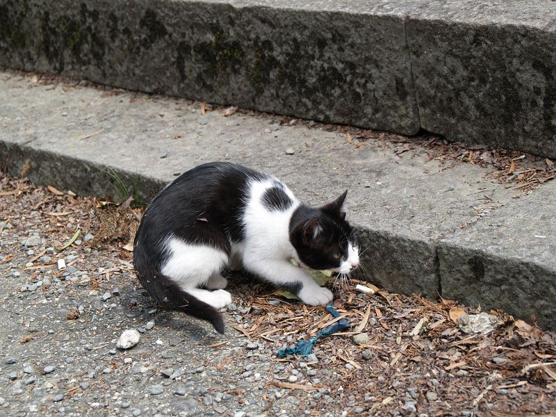 根来寺で猫とたわむれる_c0187587_13405373.jpg
