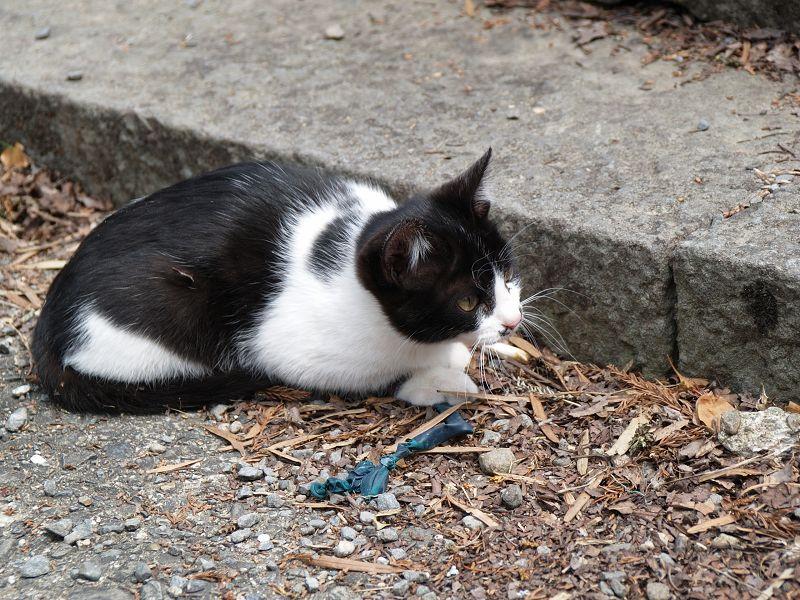 根来寺で猫とたわむれる_c0187587_13421657.jpg