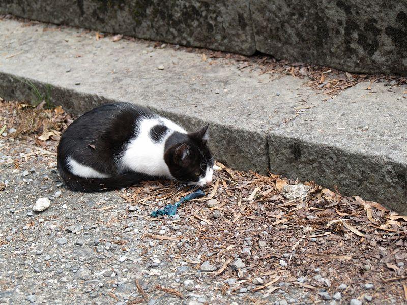 根来寺で猫とたわむれる_c0187587_1343160.jpg