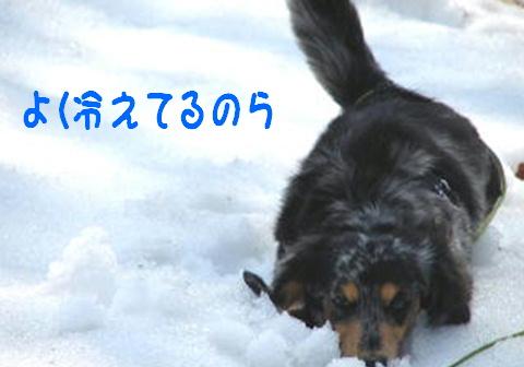f0195891_1642268.jpg