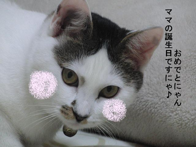 e0171996_1625756.jpg