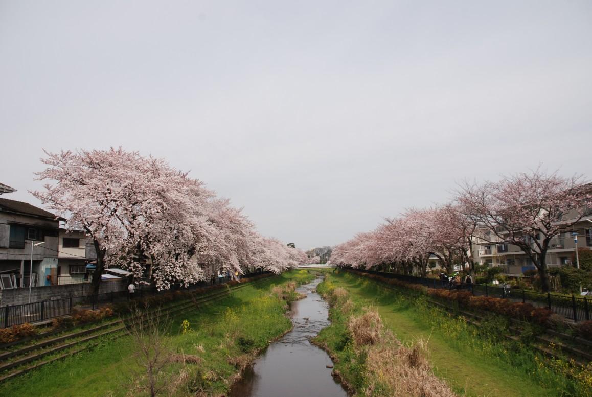 野川さくらの画像 p1_31