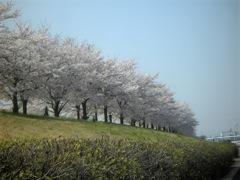 お花見と、お墓参りと、運動と_b0080104_236408.jpg