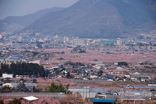 薄紅色に染まる町_c0091505_18514794.jpg