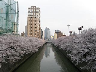 目黒川_c0025217_11371215.jpg