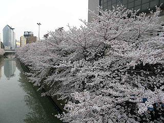 目黒川_c0025217_11373990.jpg