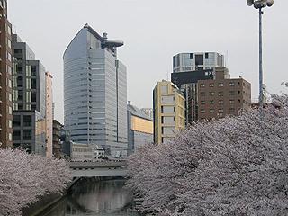 目黒川_c0025217_1138237.jpg