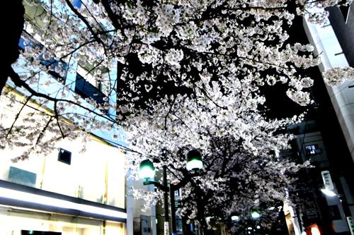 桜 開花状況Ⅱ -東京 自由が丘 南口- _e0139422_18101074.jpg
