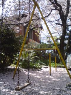 桜_f0076322_14473468.jpg