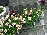 花で一杯_c0087349_5454379.jpg