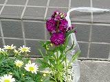 花で一杯_c0087349_5461062.jpg