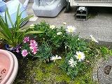 花で一杯_c0087349_5463569.jpg