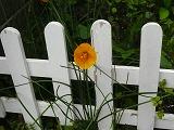 花で一杯_c0087349_5514841.jpg