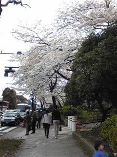 春を実感☆_d0082655_2191376.jpg