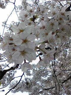 春を実感☆_d0082655_2192646.jpg