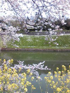 春を実感☆_d0082655_2193460.jpg