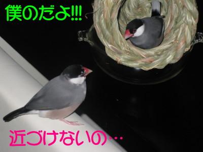 b0158061_20122518.jpg