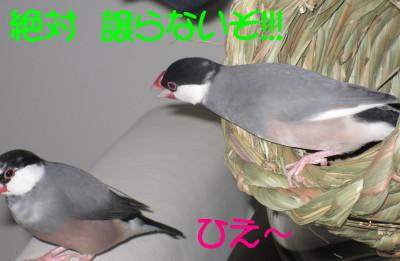b0158061_201392.jpg