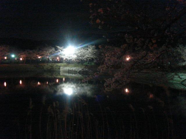 北条大池の夜桜_b0124462_21405981.jpg