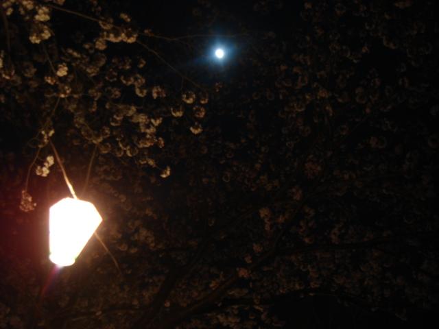 北条大池の夜桜_b0124462_21412574.jpg