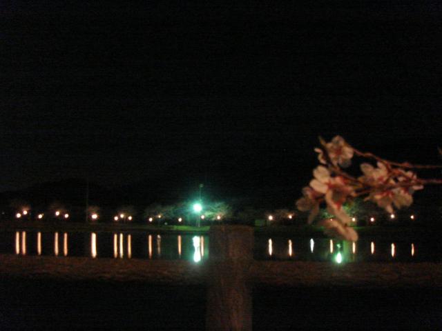 北条大池の夜桜_b0124462_21415664.jpg
