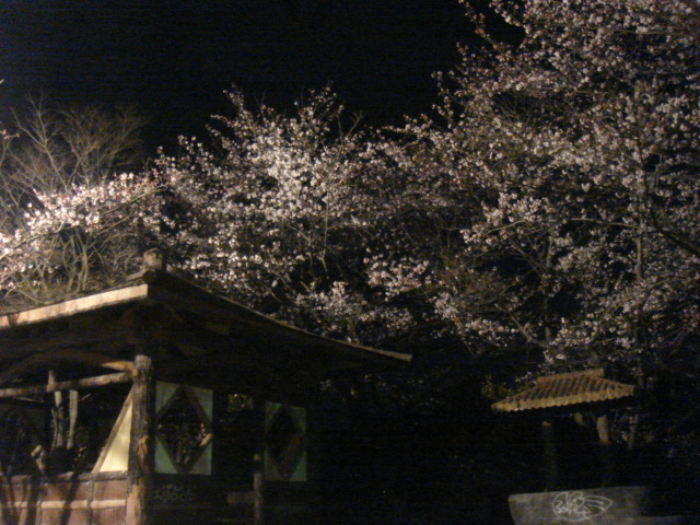 北条大池の夜桜_b0124462_21425278.jpg